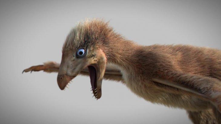 Обнаружены останки динозавра с крыльями, который жил 163 миллиона лет назад Интересное
