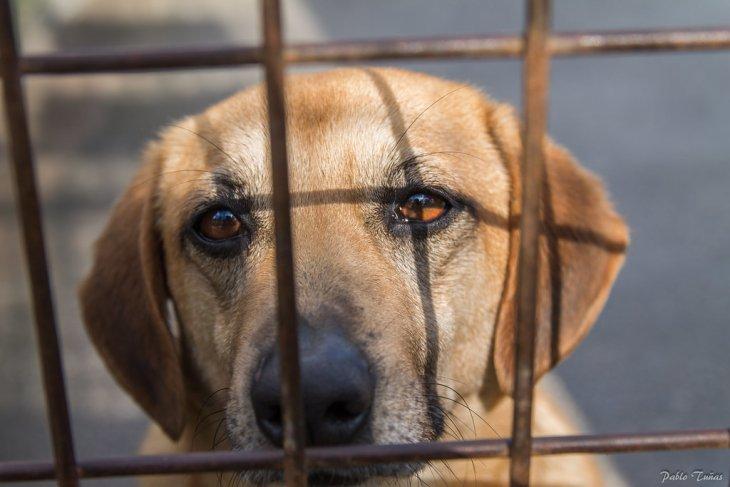 Законы о защите животных в разных странах мира Интересное