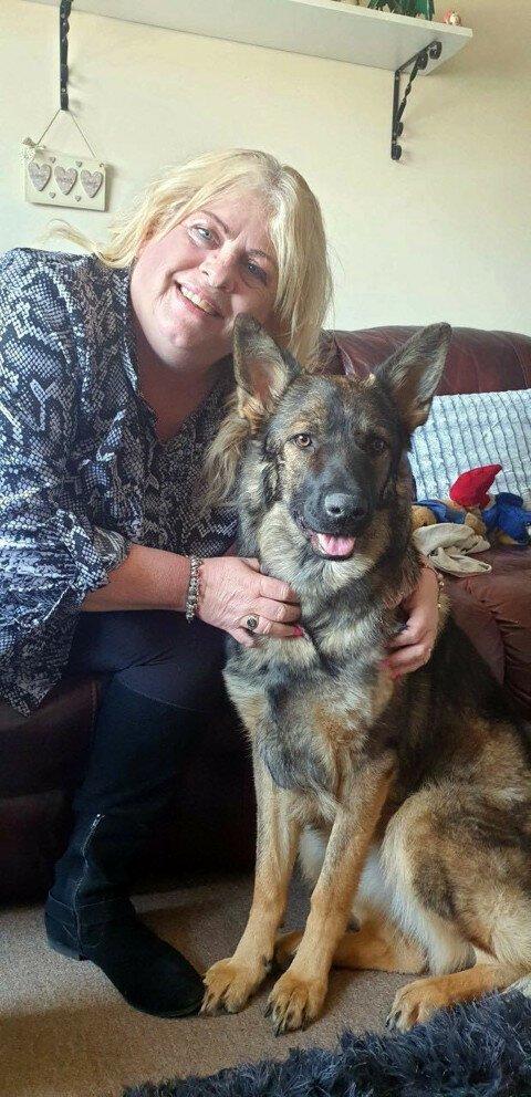 Уникальная операция: британские ветеринары восстановили овчарке раздробленную морду   Интересное