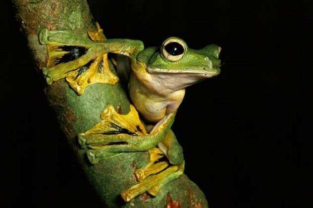 Животные с самыми странными особенностями тела   Интересное