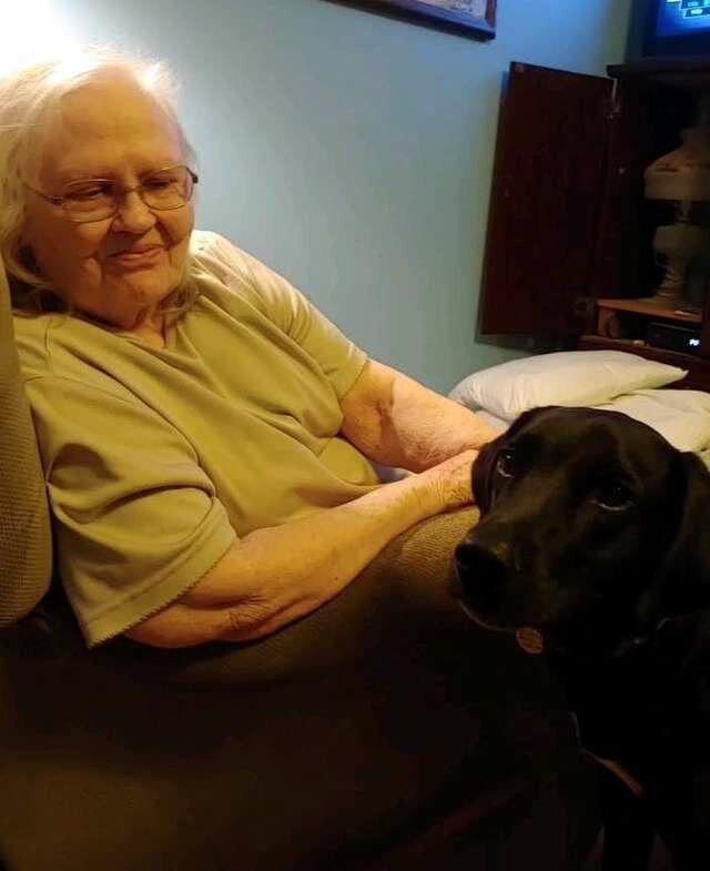 Бабушка ненавидела щенка внучки, пока он не спас ей жизнь Интересное