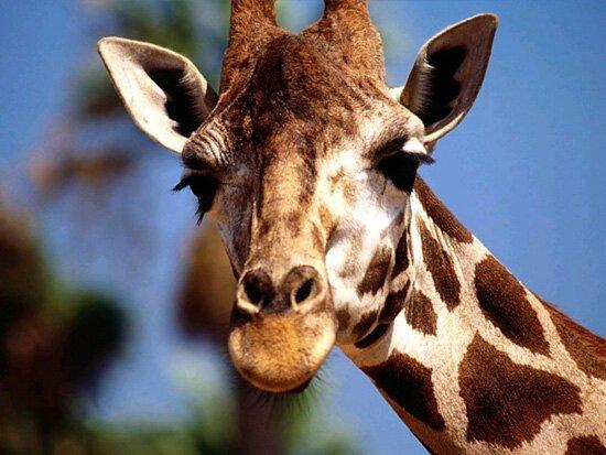 10 интересных фактов о животных Интересное