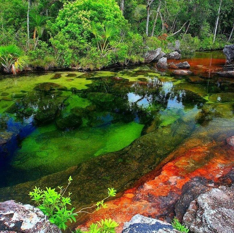 В Колумбии «расцвела» река пяти цветов Интересное