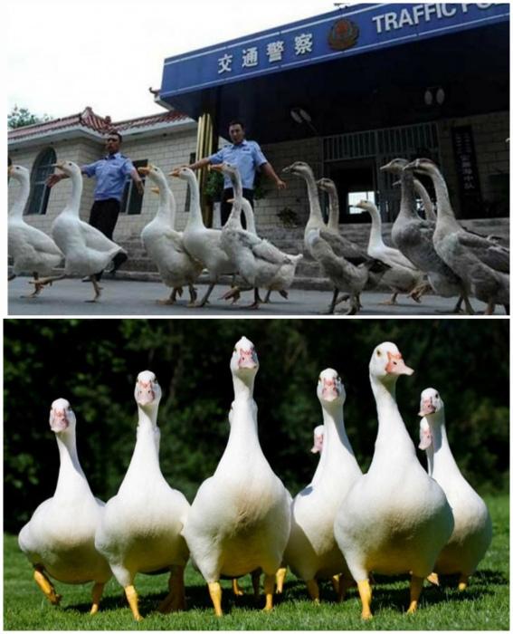 Гид по странностям: 12 обычаев, о которых стоит знать тем, кто собирается в Китай Интересное