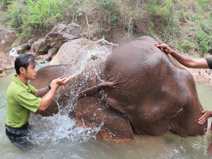 Дом престарелых для слонов-лесорубов в Мьянме природа