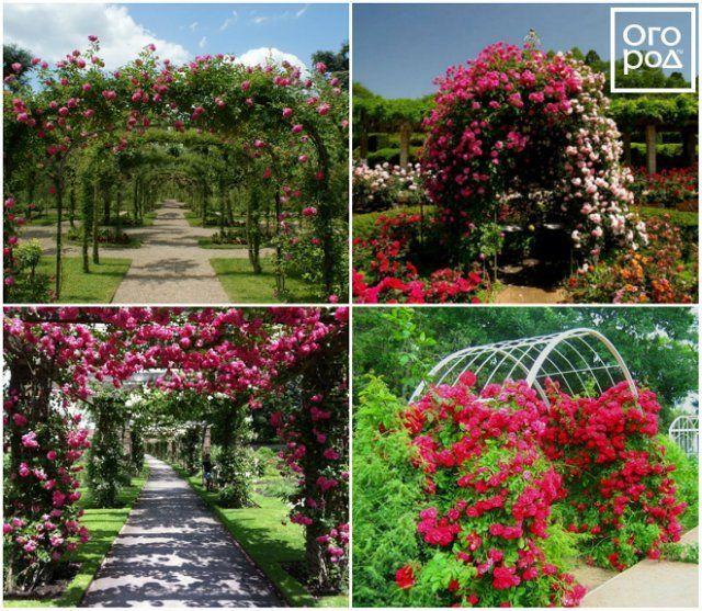 6 превосходных идей, как сделать розарий на даче цветы