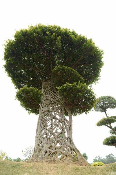 Деревья-убийцы деревья,природа,растения