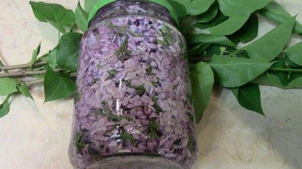 Цветет сирень — пора готовить целебную настойку для больных суставов. Рецепт и применение советы