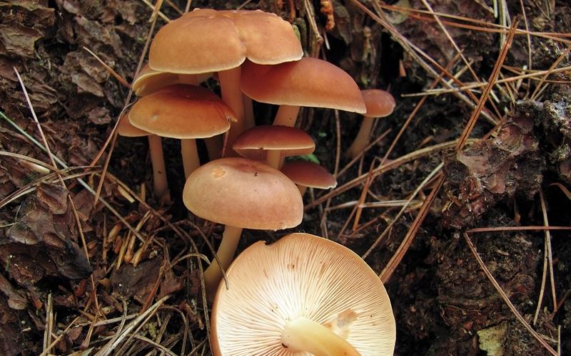 10 видов ядовитых грибов, которые лучше оставить в лесу грибной сезон,здоровье,Пространство,Россия,ядовитые грибы