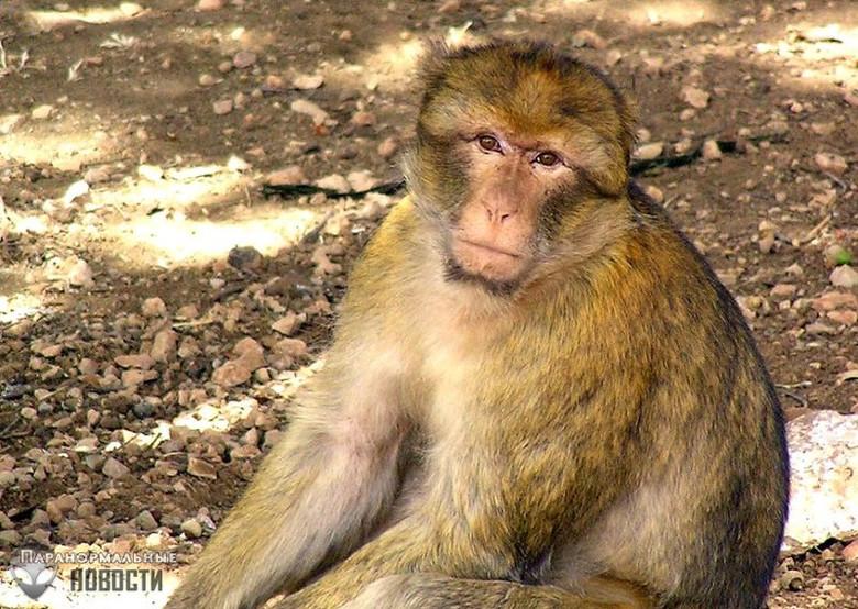 Призрак обезьяны-убийцы в древнем замке Уэльса Тайны и мифы