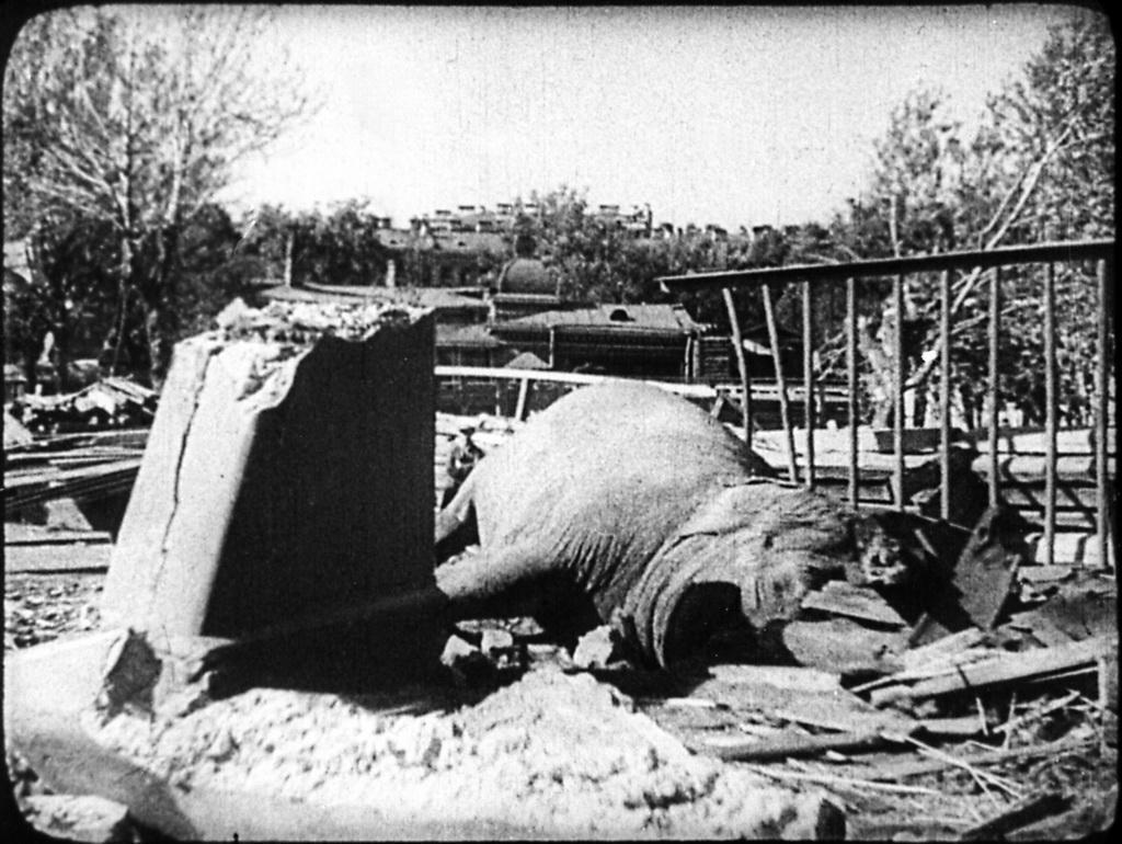 Как Ленинградский зоопарк пережил блокаду зверушки,живность,питомцы,Животные